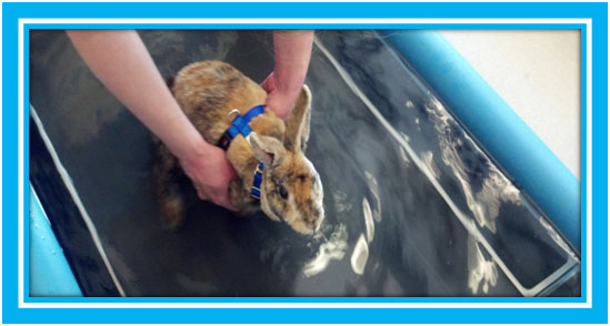 Benny in Water Treadmill