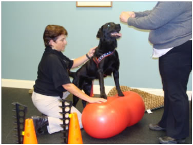 Range of Motion Rehab for Dogs