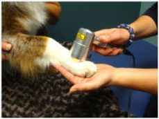 Rehab with Modalities on Dogs