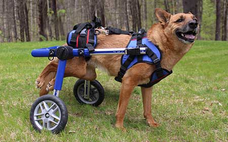 Walkin' Wheels Rear Dog Wheelchairs