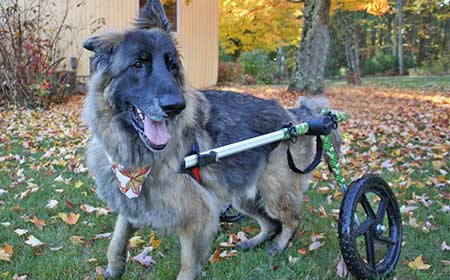 Walkin' Wheels Dog Wheelchairs Videos