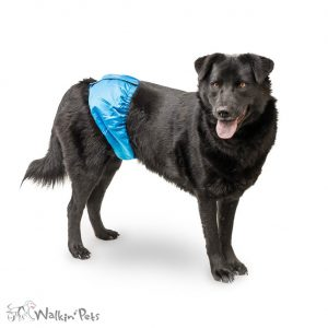 Peepers Male Wrap Belly Band for Dogs