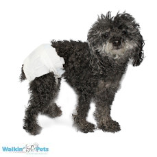 Peepers – Disposable Pet Diapers for Dogs, Cats, & Pets