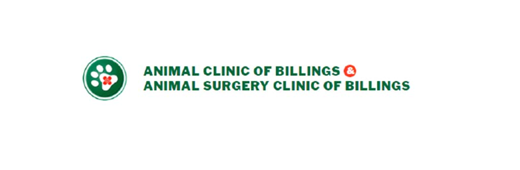 Testimonial: Animal Clinic of Billings
